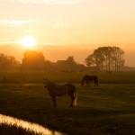 Dork Horse